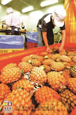 豆之家食品廠--清洗珍貴的有機鳳梨