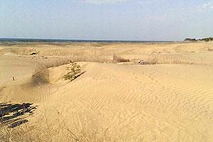 慈心希望種樹造林能保護沙洲