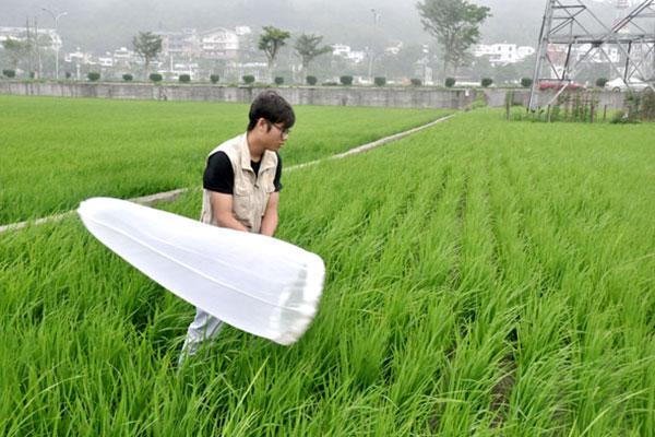 花蓮農改場人員示範以掃網方式,調查田間生態