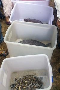 眾人為五隻海龜進行祈福儀式