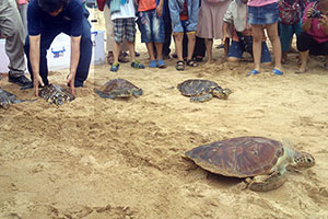 海龜在眾人溫馨祝福下重回大海懷抱
