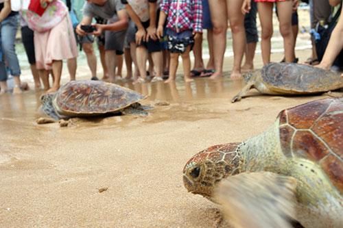眾人為海龜加油!