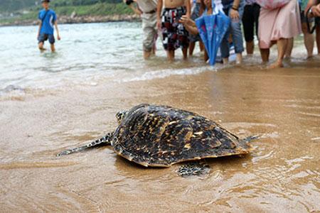 海龜們重回大海的懷抱