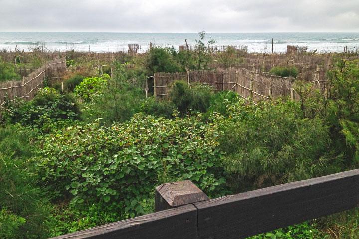 慈心與新北市合作造林,守護美麗海岸