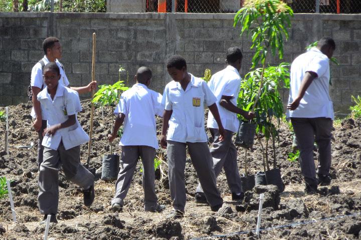 聖露西亞學生種樹