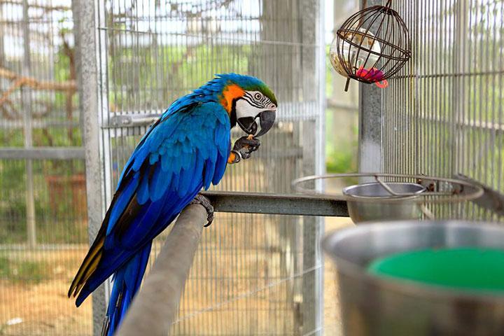 福智關廟護生教育示範園區收容之鸚鵡