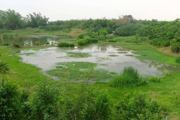 園區特別營造的生態濕地一景