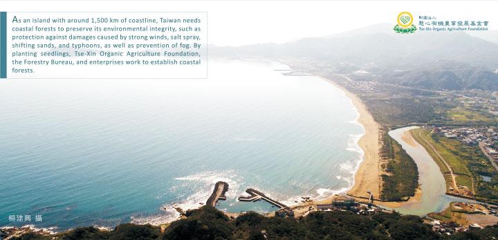 慈心種樹,守護海岸線