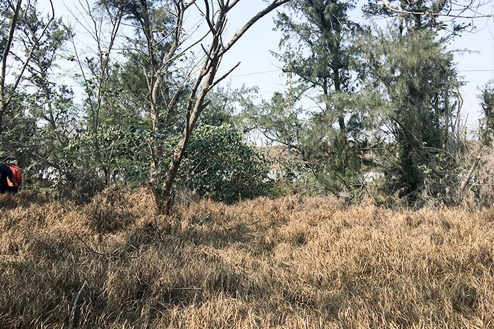尚未種植樹苗的防風林破空處