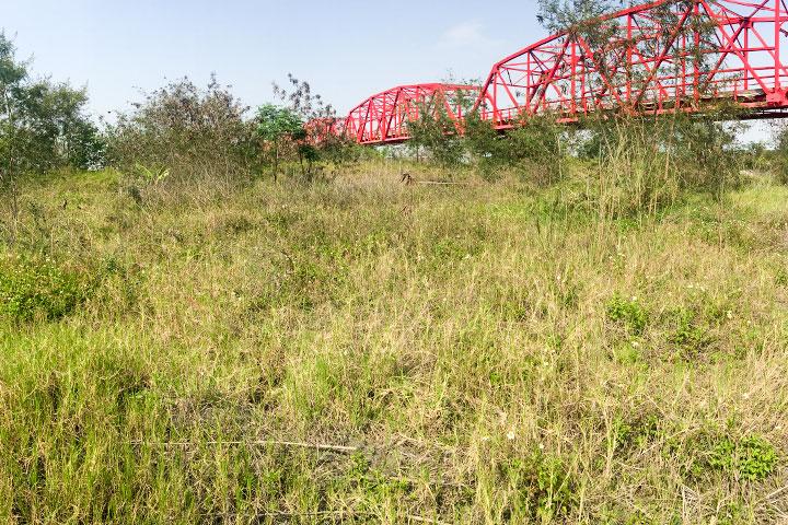 濁水溪高灘地保護原有植被避免揚塵