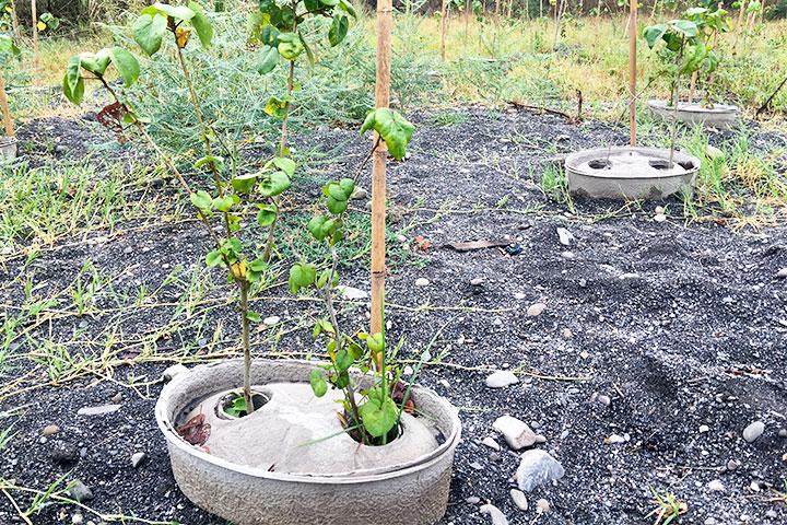 濁水溪高灘地砂土不利樹苗生長,慈心基金會配合水寶盆種植樹苗,存活率可達95%以上