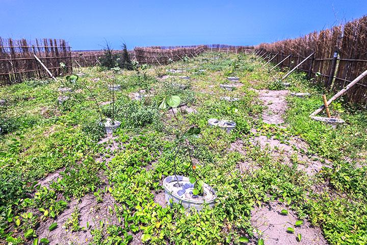 2018年桃園觀音海岸線,以水寶盆進行海岸造林