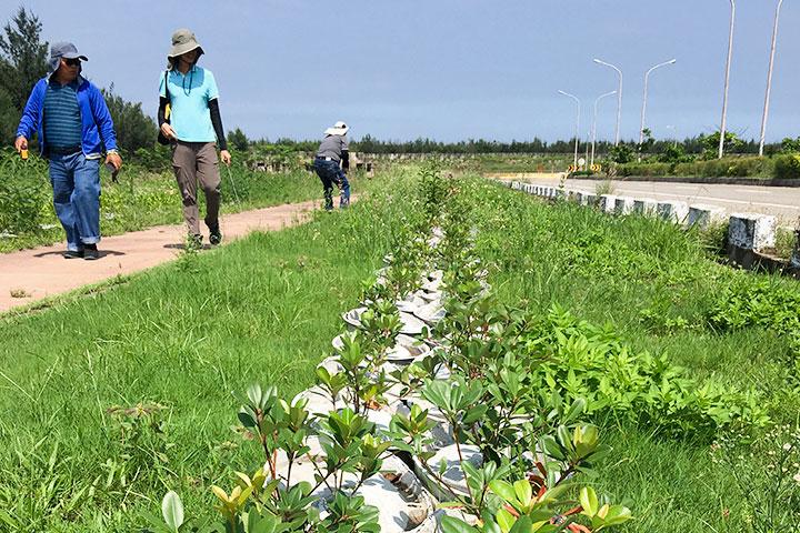 2018年7月台中港海岸地區綠美化,種植2個月後樹苗成長狀況