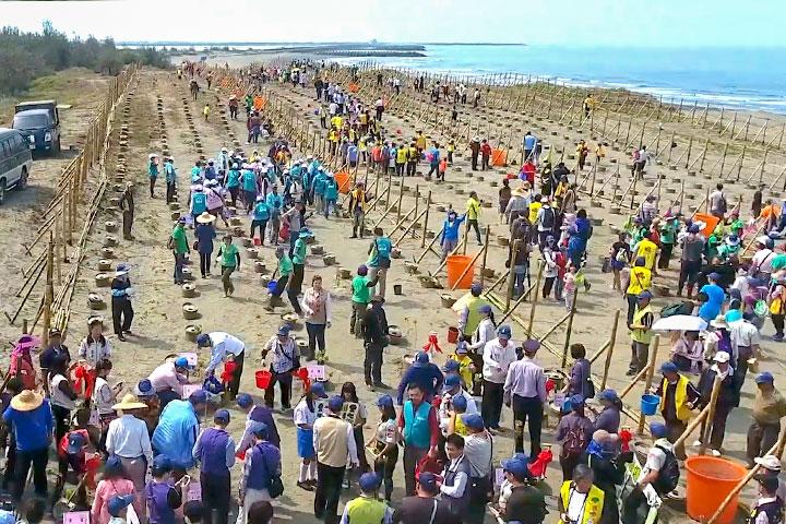 海岸種樹行動