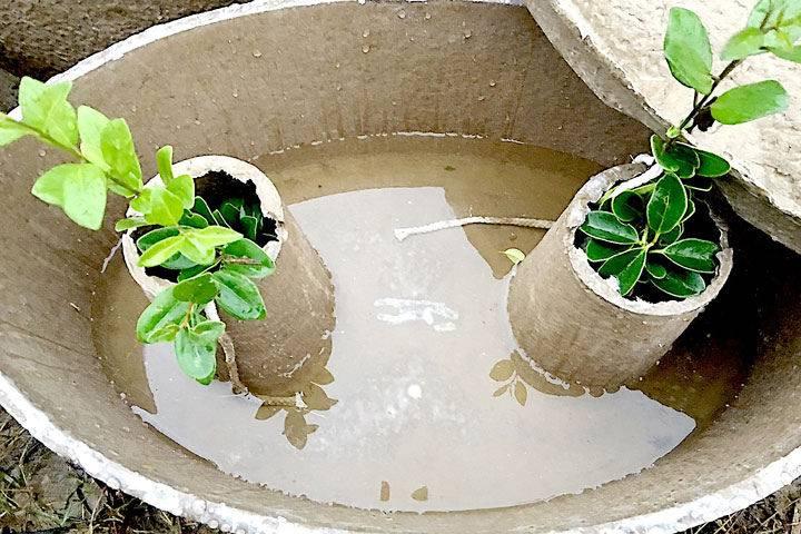 水源寶育樹盆內觀