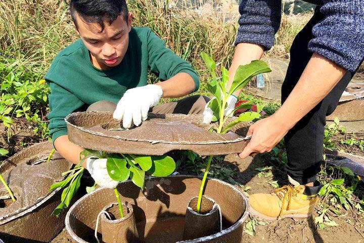 以水源寶育樹盆進行樹苗栽種