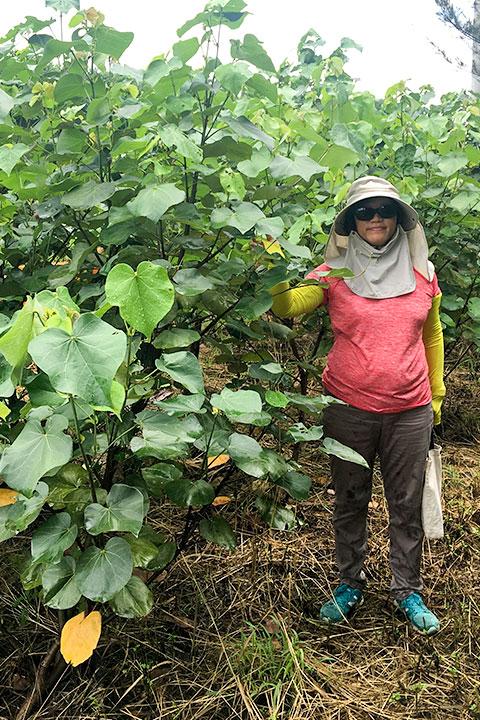 2017年雲林麥寮海岸林更新,種植14個月後,使用水寶盆種植的樹苗狀況
