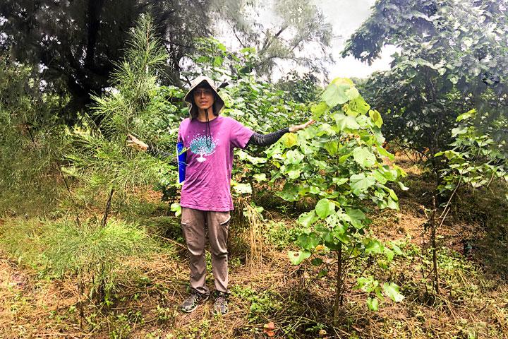 2017年雲林麥寮海岸林更新,種植14個月後,沒有使用水寶盆種植的樹苗狀況