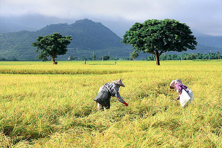 慈心基金會執行長蘇慕容,獲行政院農委會「有機農業大使」殊榮