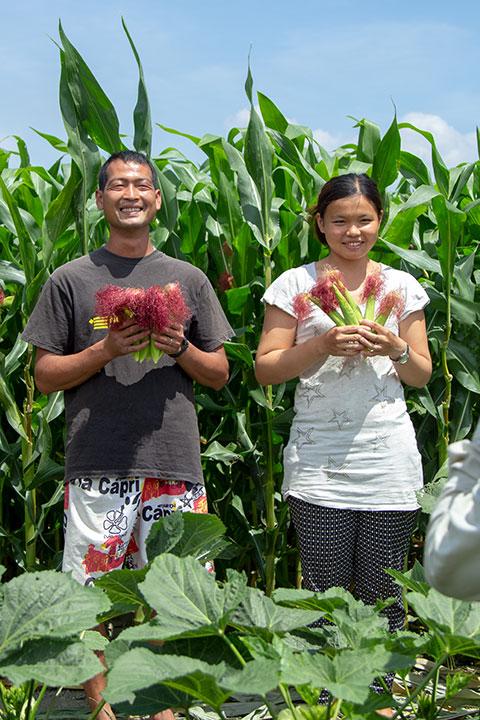 在堅持友善農法栽種而成的紅鬚玉米筍,不僅顆粒飽滿也清爽鮮甜