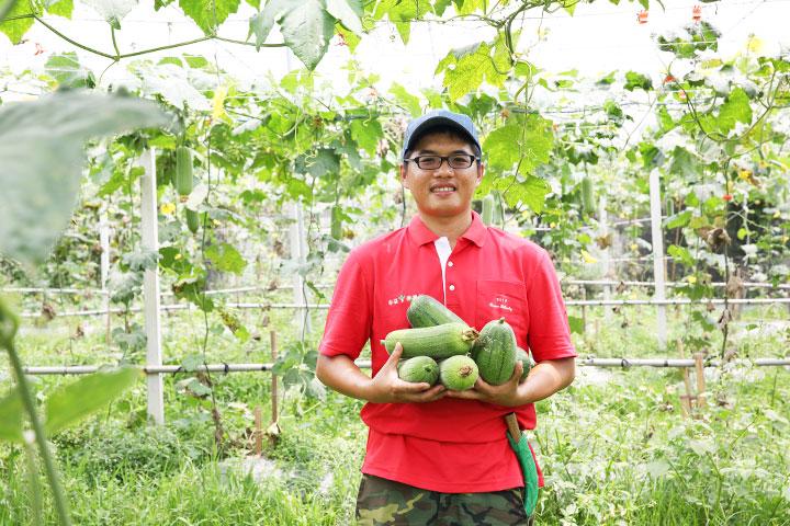 香甜不粗絲的絲瓜,產自麻園農場,堅持不施農藥和化肥,種出美味也保護環境