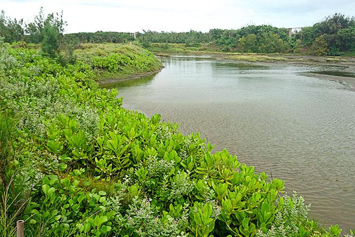 臺西海岸造林-植種後
