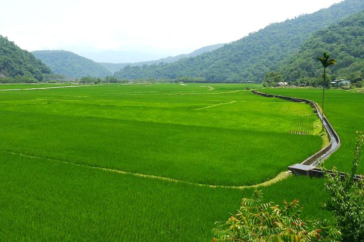 慈心基金會陪伴卓溪布農族人在南安部落開出了玉山腳下第一畝有機生態水田,並協助開發有機稻米「瓦拉米」品牌