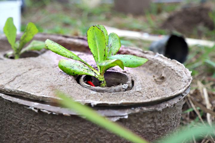 慈心基金會使用海岸種樹利器「水寶盆」及「樹博士有益菌」,幫助樹苗克服海岸惡劣環境順利成長