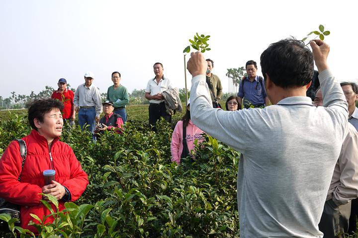 轉作初期,慈心基金會陪伴茶農走訪南投有機茶園,向資深的老師傅學習有機茶園栽培管理技巧