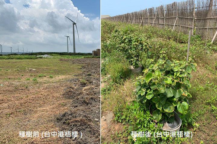 慈心基金會將為「善合一福氣包」支持者在臺中梧棲海邊種下臺灣原生樹種,守護臺灣第一線土地