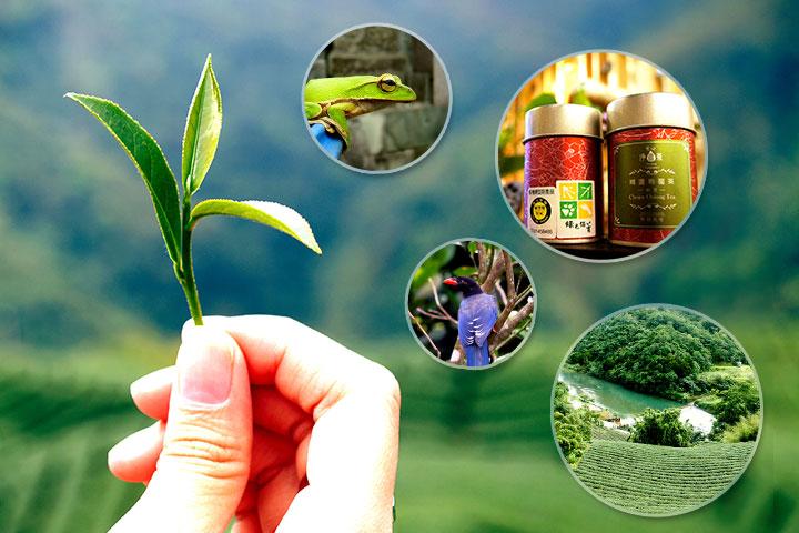 慈心基金會參與「第六屆慈濟論壇」,分享淨源計畫有機茶園生物多樣性成果