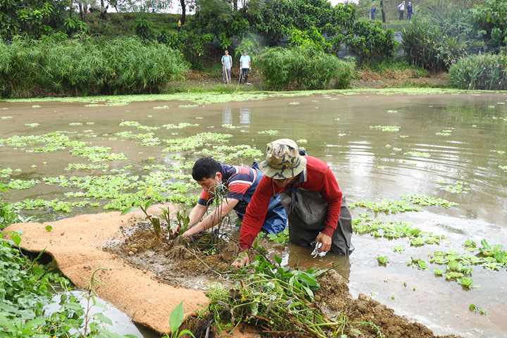 福智關廟護生園打造人工生態浮島,以實作推動環保、護生