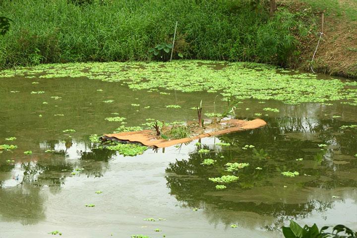 關廟護生園營造適地適性的生態環境,為小動物們打造安居宜棲的家園