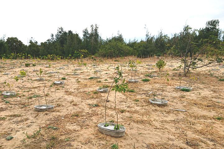 在年雨量僅臺灣一半的金門地區種樹,導入「水寶盆」技術可大幅改善海岸造林成效,提升樹木存活率達 7 成