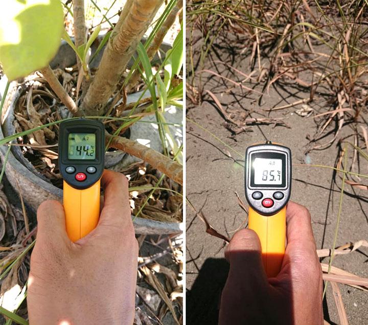 夏天中午時,海岸地溫高達攝氏 85 度,但同樣地點的水寶盆可降低地溫到攝氏 45 度,減緩樹苗生長逆境