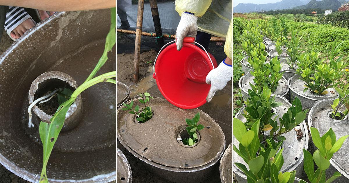 「水寶盆」的盆上蓋能將水收集到盆中貯存,再以導水繩運用毛細原理導水到土中,給樹苗穩定的水源及適宜生存環境,提高存活率及成長速度