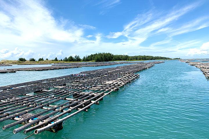 透過海岸種樹,守護美麗的台江內海、七股潟湖的自然文化遺產