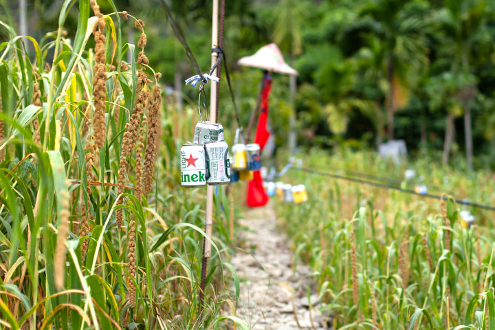 花東農友自製防鳥資材,盼在不傷害野生動物的前提下,減緩小米耕種的農損問題