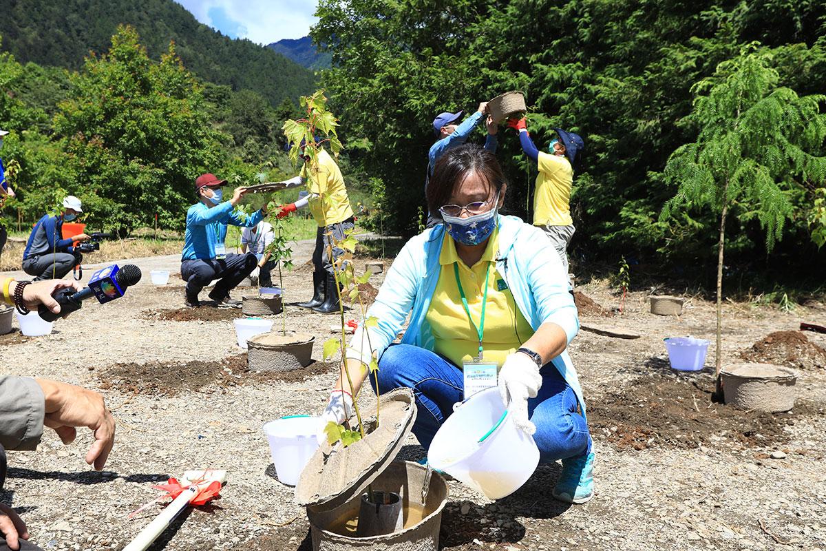 慈心種樹總監程禮怡在「植樹造林,復育回鮭」啟動儀式上,使用水寶盆植樹,為樹苗提供良好的生長環境