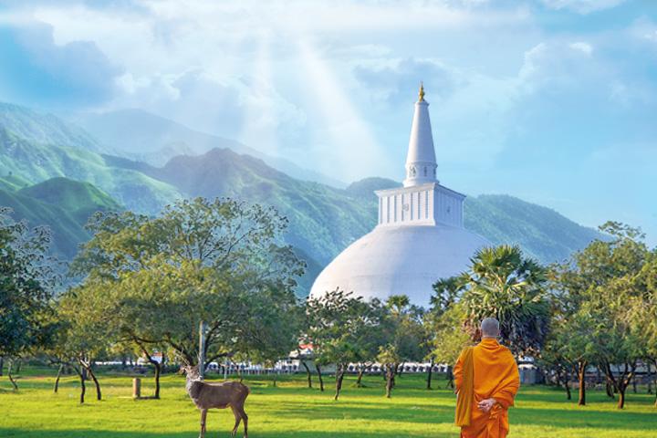 特別報導:那山,那寺,那鹿——達摩長老及其寺院
