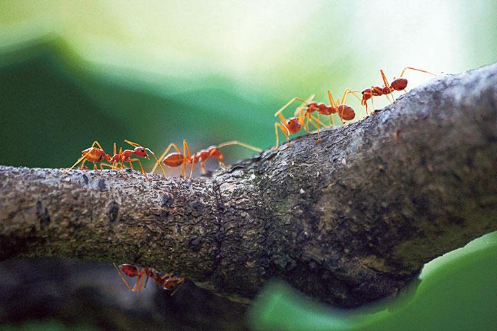 從心出發:火宅飛蟻