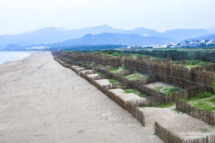 進行海岸造林守護臺灣海岸線與國土保安