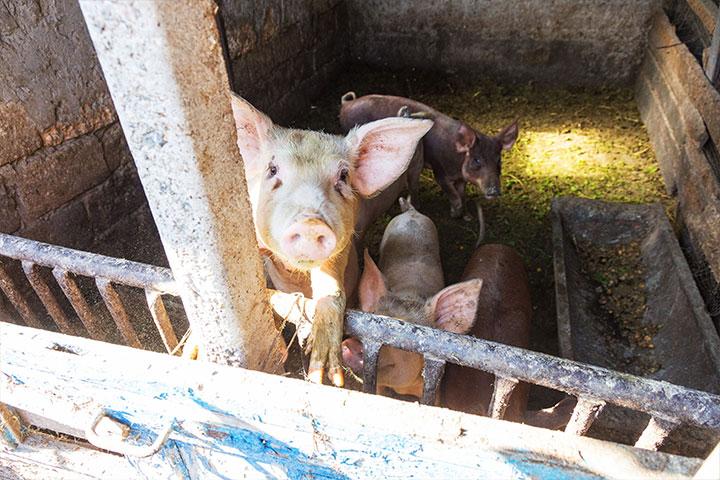 〈慈心理念、素食行動〉如俊法師導讀摘要 2. 吃素v.s.吃肉,如何掙脫共業的網?
