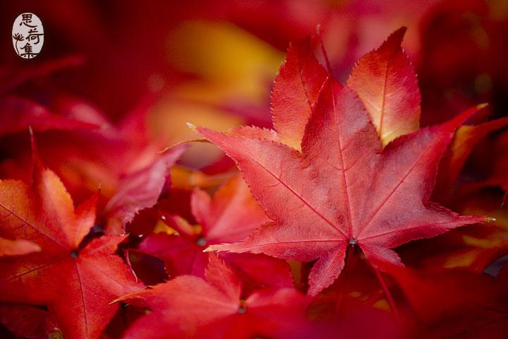 【思荷集】真如老師文集《十月,送你一片紅葉》,挺立大地溫暖人心